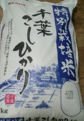 パールライス 特別栽培米 千葉こしひかり
