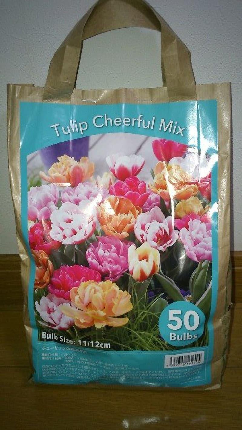 [2]が投稿したTulip Cheerful Mix チューリップ球根 50球の写真