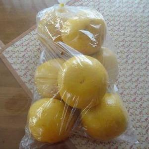 グレープフルーツ 8CT