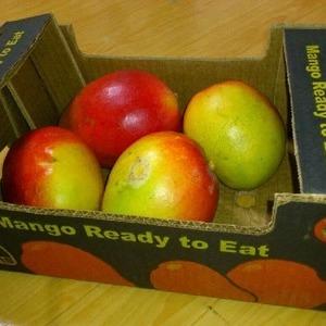 アップルマンゴー 2.5kg ブラジル産