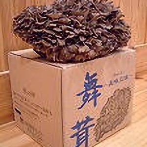 山形舞茸センター 美味三昧 舞茸