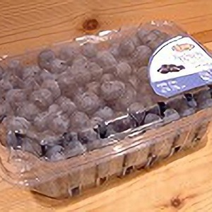 vitalberry VBM ブルーベリー
