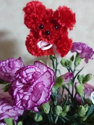 なおさん[8]が投稿した鉢植え カーネーションの写真