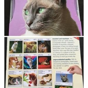 2017年 日めくり 写真集カレンダー GALLERY CALENDAR