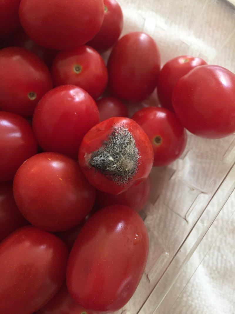るーさん[13]が投稿したエンジェル スウィート トマトの写真