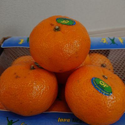 (名無し)さん[4]が投稿したオアオレンジの写真